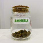 fleurs cbd amnesia